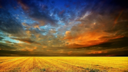 Cloudy Sunset over Golden Field - Sky, Clouds, Fields, Sunsets, Nature