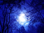 Blue Moonlight Through Trees