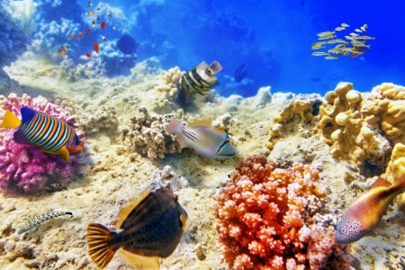 Tropical Coral Reef and Fish - Fish, Nature, Tropical, Coral Reefs