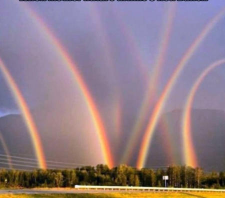 Rainbows - rainbows, Trees, Colorful, Nature, Sky