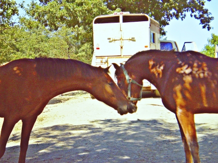 lovey dovey - two, animals, horses, love