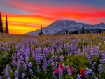 Sunset over mountain meadow