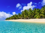 Tropical Sandy Beach Paradise