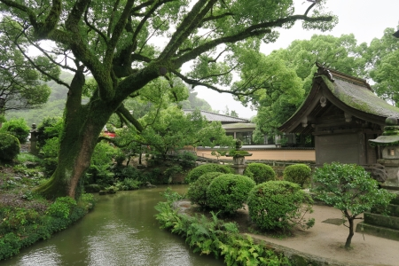 Japanese garden - moss, nature, greenery, plants