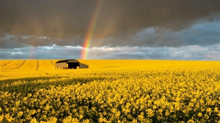 Rainbow over Rapeseed Field - Sky, Clouds, Fields, Rainbows, Nature