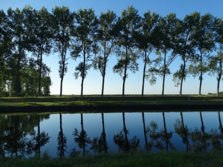 Reflection of trees - Road, Trees, Evening, Nature, River