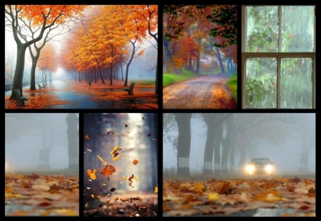 Autumn - Colorful, Nature, Collage, Autumn, Forest