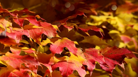 Leaves of Bright Colors - colors, fall, leaves, Firefox Persona theme, ground, autumn, bright
