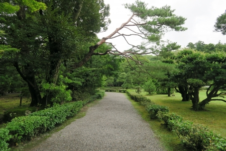 Beautiful park - tree, Japan, green, plants, park