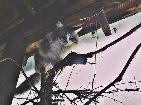 cat perch - vine, above, cat, perch