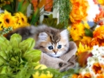The kitty's flowers