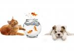 картинки кошек собак рыбок постановил, что открыть