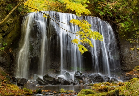 Forest waterfall - forest, stones, waterfall, beautiful, trees, branches