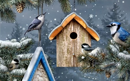winter song birds f1c birds animals background. Black Bedroom Furniture Sets. Home Design Ideas