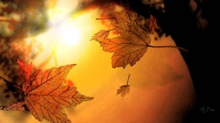 Fall Fresco - fall, leaves, sky, sunset, Firefox Persona theme, sunshine, sunrise, autumn