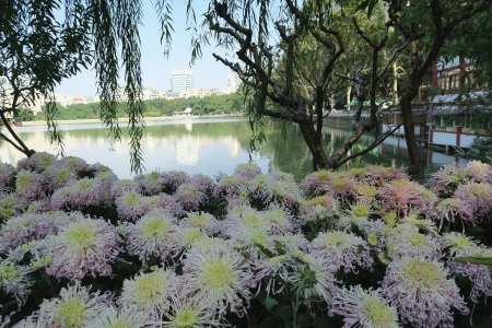 Lakeside flowers - flowers, Lakeside, park, willow