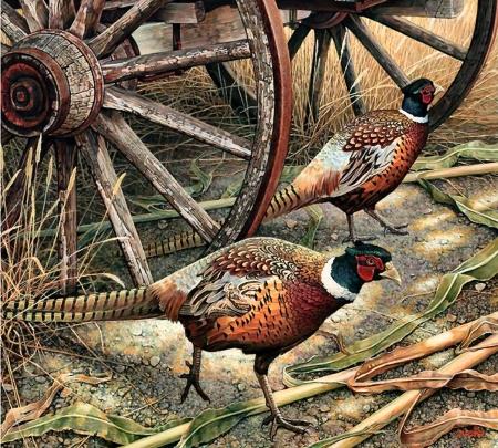 Harvest Time Pheasant Birds Animals Background