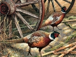 Harvest Time - Pheasant