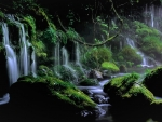 Mossy Forest Waterfalls