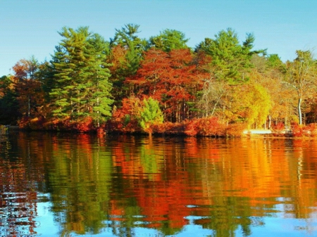 Calm Lake - calm, forest, trees, reflection, nature, autumn, lake, mirror