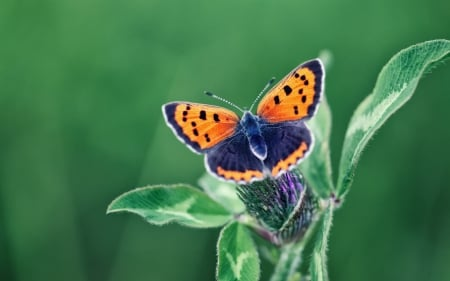 Butterfly on Flower - macro, wings, animal, insects, butterfly, flower