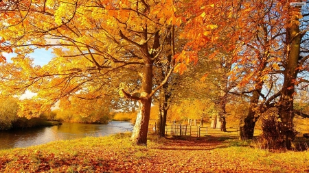 Autumn Grove - forest, autumn, grove, nature, trees, lake
