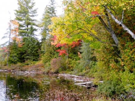 Early Fall At The River - Fall, Early Fall, Trees, River, Photography, Nature