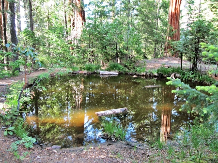 burns pond - forest, trees, reflection, pond