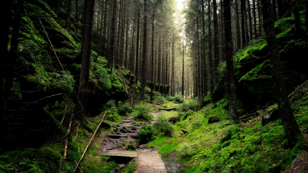 Forest Trail Forests Nature Background Wallpapers On Desktop Nexus Image 2301807