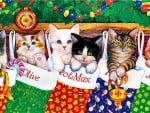 Stocking Kittens - Kittens