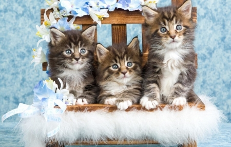 cute trio on the chair - cats, trio, kittens, chair, animals