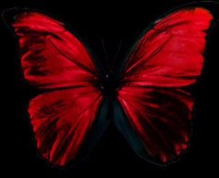 Red And Black Butterfly - Butterflies & Animals Background ...