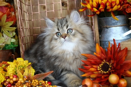 Fluffy cat - sweet, cozy, flowers, kitty, adorable, autumn, kitten, cute, grey, fluffy, cat, pot