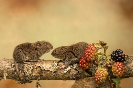 Mice - branch, mice, animals, fruits