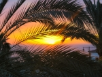Sunset Through Coconut Trees