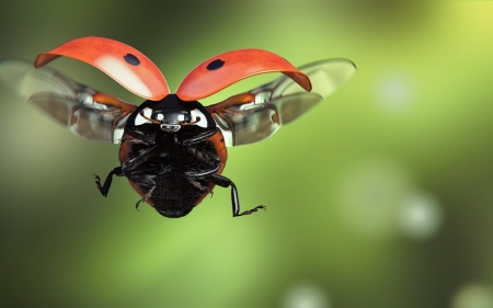 Ladybug - red, fantasy, ladybug, luminos, green, flying, insect, monteillard damien