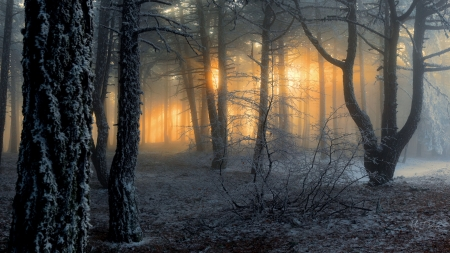 Sun Shadows - forest, dawn, shadows, sunrise, Firefox Persona theme, winter, light
