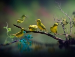 Beautiful Bird Wildlife