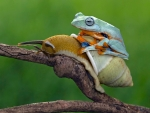 Frog and snail