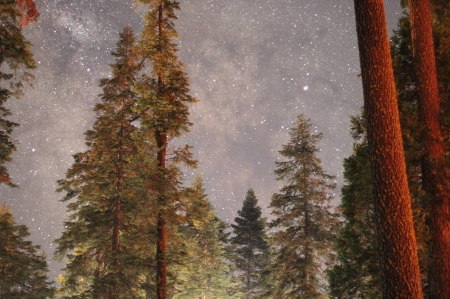 stars in the sky - stars, fun, cool, forest, space