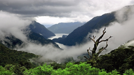 Fog With Mountains - mountains, nature, river, trees, sky, fog