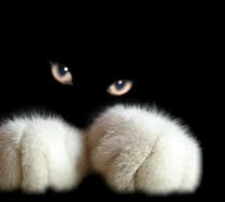 White And Black Cat Cats Animals Background Wallpapers On Desktop Nexus Image 2305414