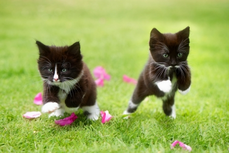 Image result for running kittens