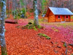Wooden house in autumn forest