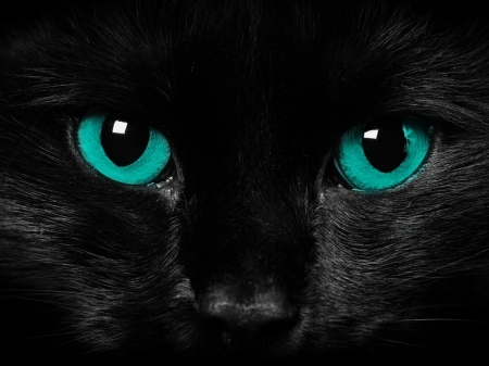 Beautiful Black Cat Cats Animals Background Wallpapers On