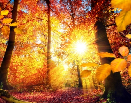 Beautiful Autumn Day - forest, autumn, day, nature, beautiful