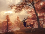 Autumn Stag in Woods
