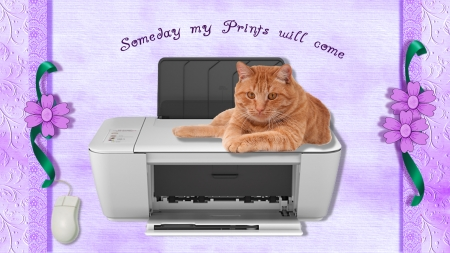 Once Upon A Time - text, flowers, cat, printer