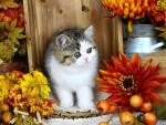 Autumn still life with kitty