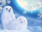 Snowy owls under moonlight